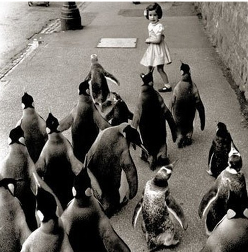 horde of penguins