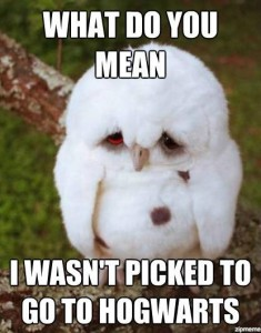 Baby owl sad about not getting picked for Hogwarts