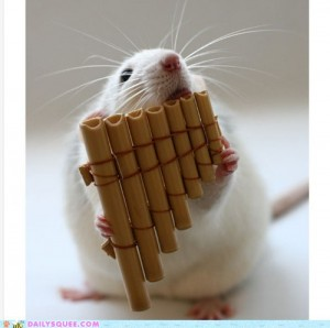 Rat playing the pipes