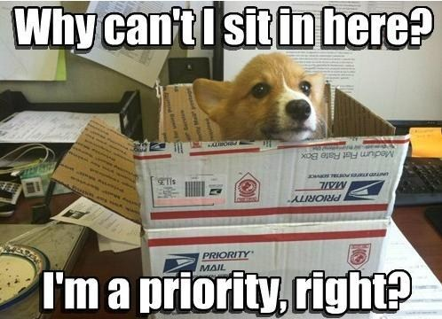 I'm not sure it is feasible to send all of my readers a box full of corgi wonderful, though